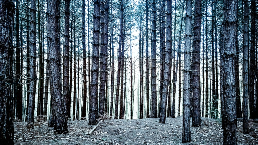 Newmillerdam woods